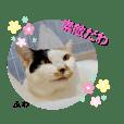 cat_cafe_sakura_20201023142145
