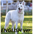 The White Shepherd Dog! ENGLISH ver.(P)1