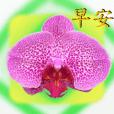 Tomyo's Garden [1] < Animated Stickers>