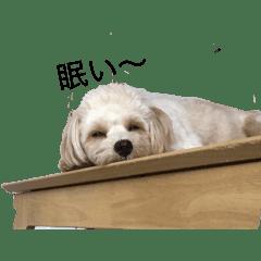 とても可愛い犬のスタンプ