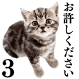 Cat Photo Stickers 03