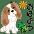 Move! Cavalier dog