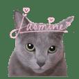 わがまま猫ジャスミンの日常 1日目