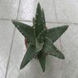 植物拍照紀念照片