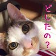 NECOLIN Cats - Kan & Rui 01