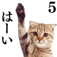 Cat Photo Stickers 05