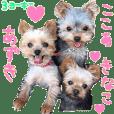 Yorkie Azuki Kinako Cocoa sticker