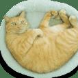 チャトのネコ目線