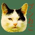 ドヤ猫のメモリーズ<ドヤ顔のドラ猫物語>