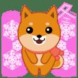 """Shiba dog """"MUSASHI"""" 10 winter"""
