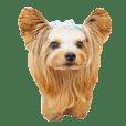 doggiesfan