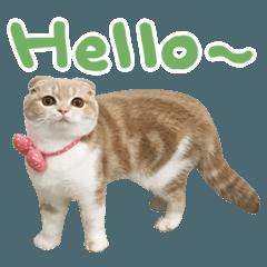 拉查花-哈囉真貓篇