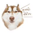 Husky Taro's secret thought. 1