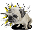 Lovely Pug Stickers