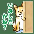 Niigata dialect speaking shibainu