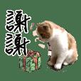 Cute cat chacha
