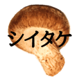 Mushroom sticker!!!