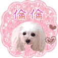 "toy poodle ""LUNLUN""-movie- Chinese 3"