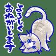 = Stray cat =