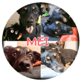 Rascal Dogs Meimei