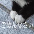 Park Cats 2