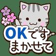 American shorthair cat 5