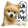 Dog Talk!!Dog Photos,English&Japanese