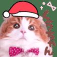 Qoo-chan3