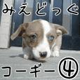 みえどっぐスタンプ コーギーカーディ編 4