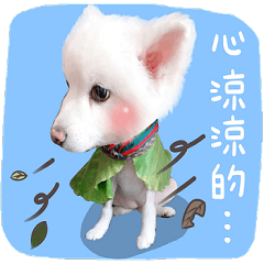 狐狸犬Gucci——媽寶日常
