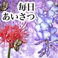 可愛い過ぎないお花2 彼岸花と藤の花、蝶々