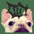 French Bulldog-Puni