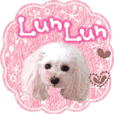 "toy poodle ""LUNLUN""-movie- English 3"