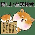 "Shiba Inu's ""New Winter Life"" Sticker"