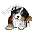 HOOKED ON BERNESE!