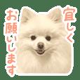 Lal-chan5