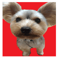 Sticker of a Yorkshire terrier4