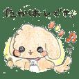 Takahashi's Toy poodle