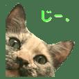 madara cat sticker