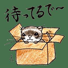 関西弁のフェレット日常編。vol.1