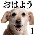 Dog Photo Stickers 01