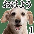 犬写真スタンプ1
