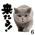 Cat Photo Stickers 06