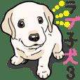 Wanko-biyori puppy Labrador retriever 3