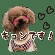 可爱的狗/运动玩具贵宾犬