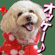doggiesfan3