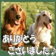 dachshundfan