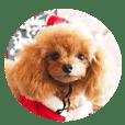 クリスマスファン