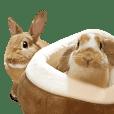 Rabbit's Pee (Guest Mu-chan)