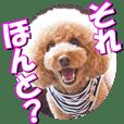 doggiesfan2